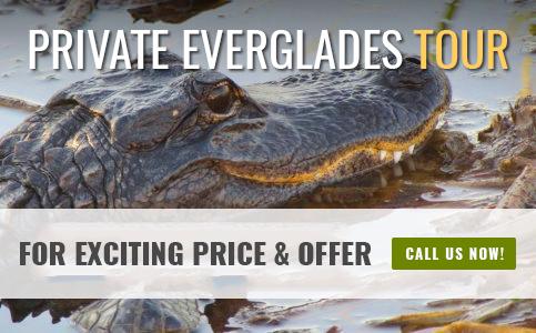 Private Everglades Tours