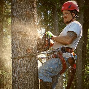 Tree Service Specialist cutting down dangerous tree