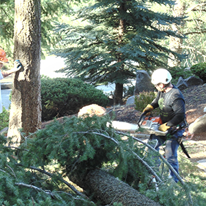 Tree Service Specialist cleaning up tree and branches from a storm