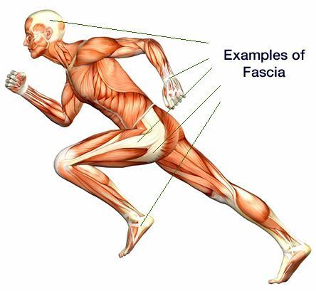 Fascia running body examples of