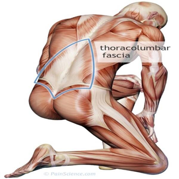 Learn about soft tissue & fascia