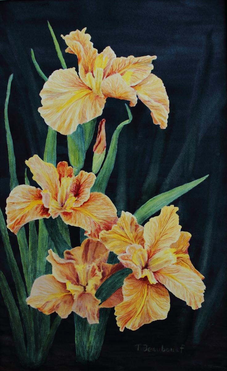 Beaubouef-Theresa-Louisiana-Irises-21x13