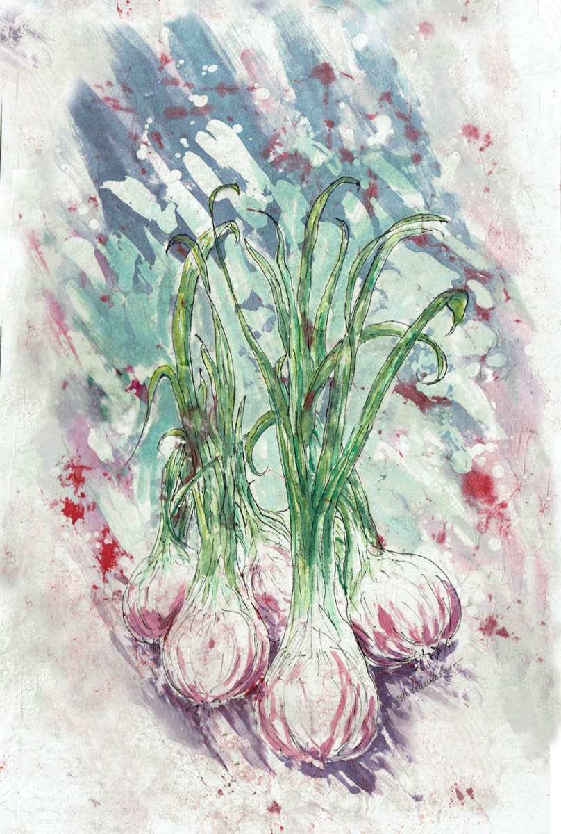 Margaret-Hawkins-Shallots-19x12-unframed