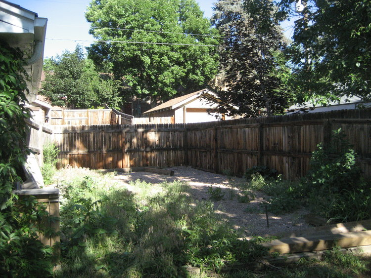 The side yard where we planned to make a designated potty spot for the dogs