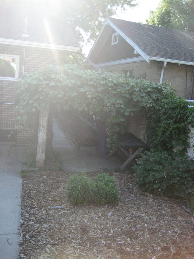 The pergola that was falling over from rot and ivy