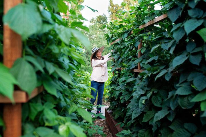 Jan picking berries in her vegetable and fruit garden