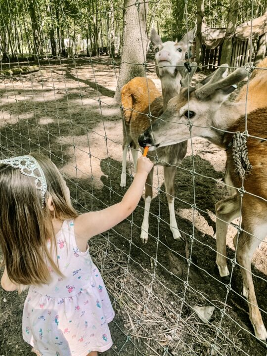Feed the animals at the Indian Creek Zoo