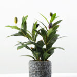 Olive in pot GS-1380184