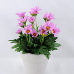 Artificial Flower 13*13*19cm Daisy in Paper pot GS-03319124-Z1