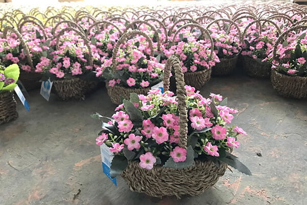 Artificial flower pastoral style small chrysanthemum basket potted1 - Artificial flower pastoral style small chrysanthemum basket potted