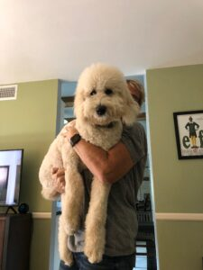 Sully saintberdoodle