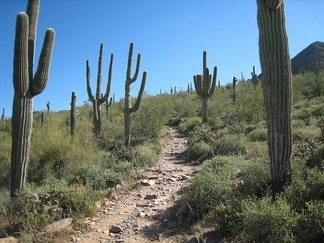 hiking trail in arizona