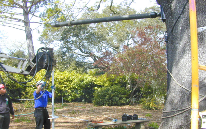 Coast Oak wind assessment, cabling and bracing project