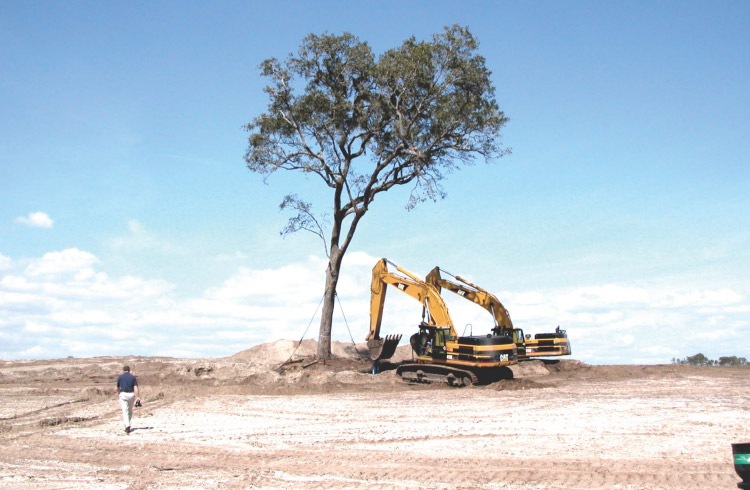 Sea Island tree relocation