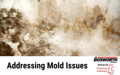 Addressing Mold Issues