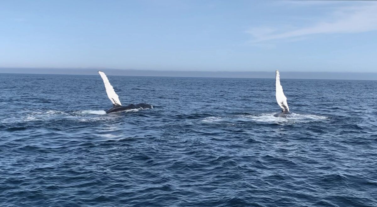 7 Things To Know About Whale Watching Trips