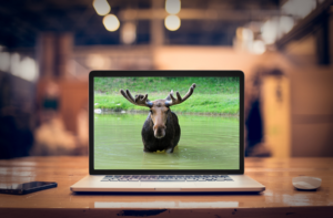 Laptop_Moose