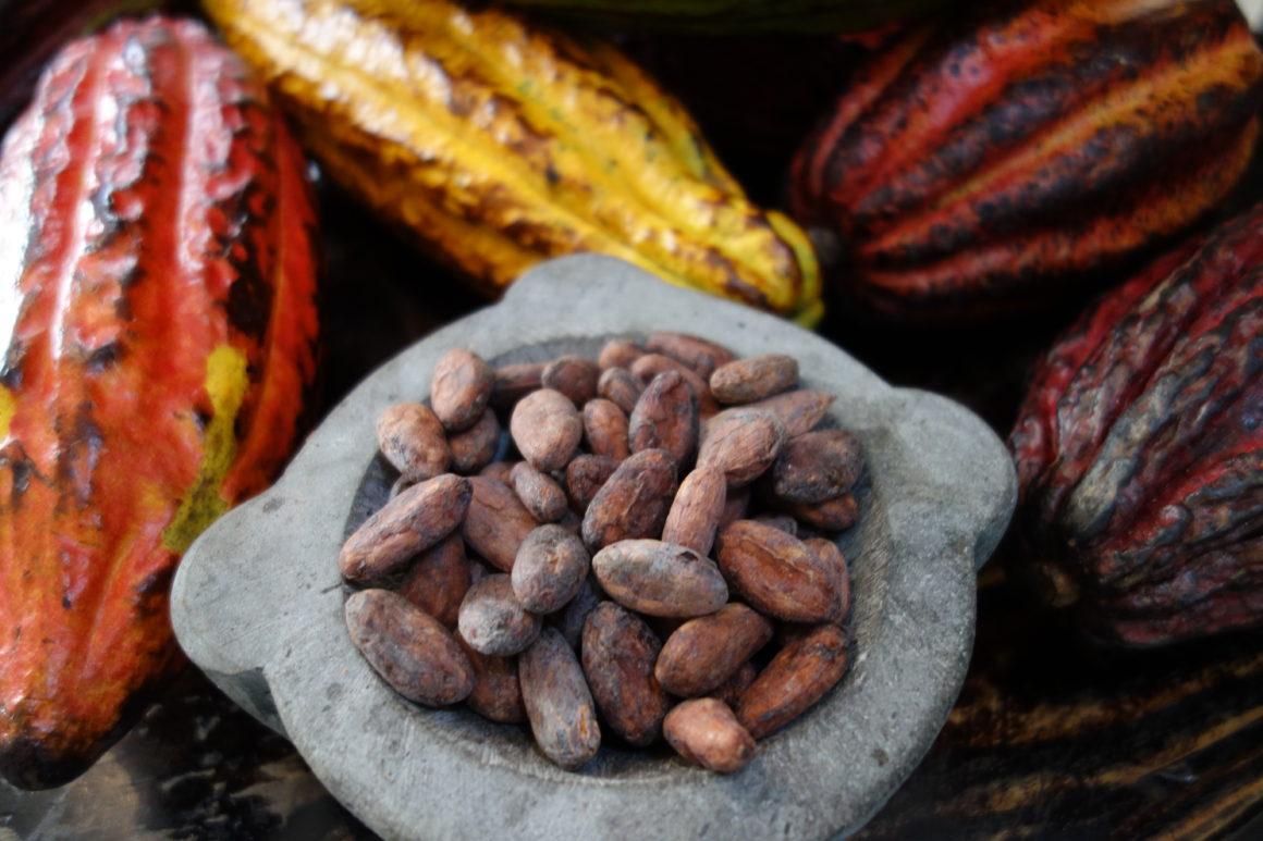 Firetree chocolate, the UK's new super premium chocolate brand cocoa beans