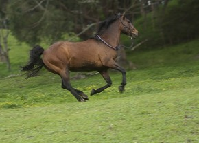 Our Mission - The Equine Soundness Association of North America