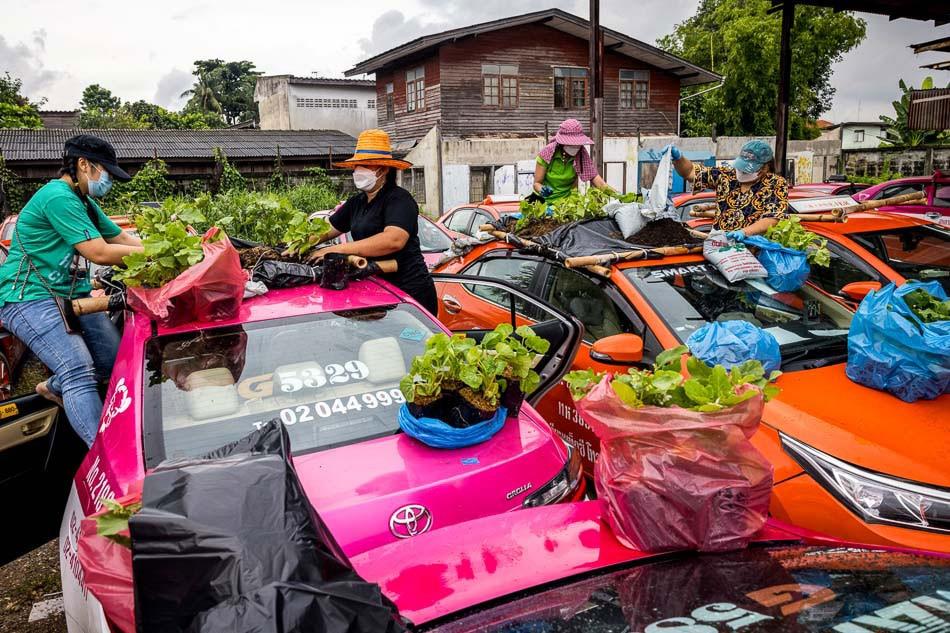 Tayland'da taksiler sebze bahçesi oldu