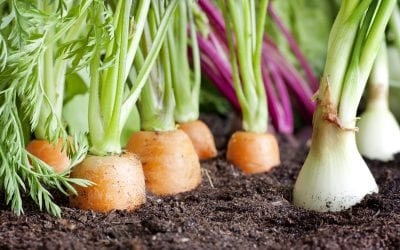 Late Planting: 4 Tips On How To Start A Fall Garden