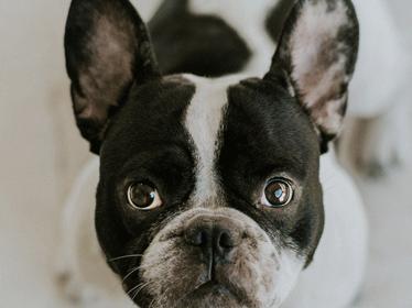 Cute photo of dog