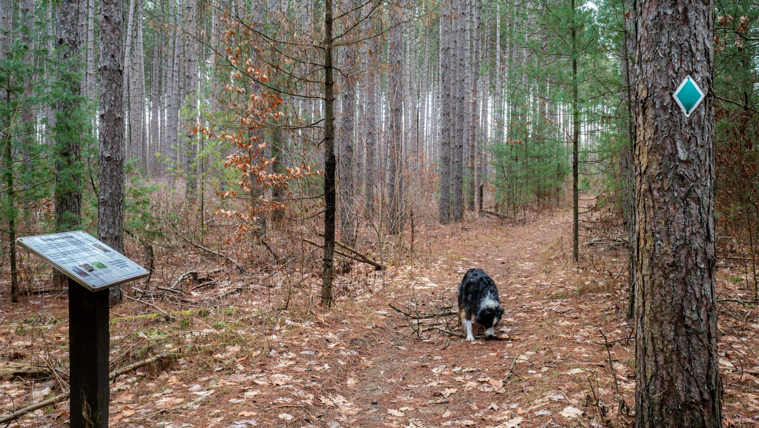 Oak Ridges Trail