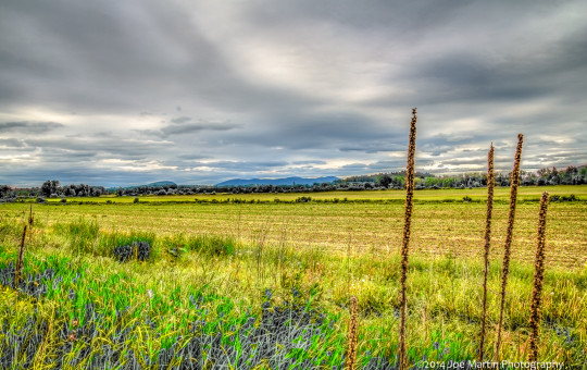 Nature photo looking across a farmed field