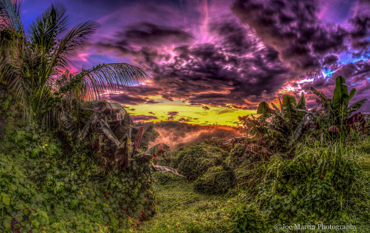 Nature photo of the jungle in Puerto Rico