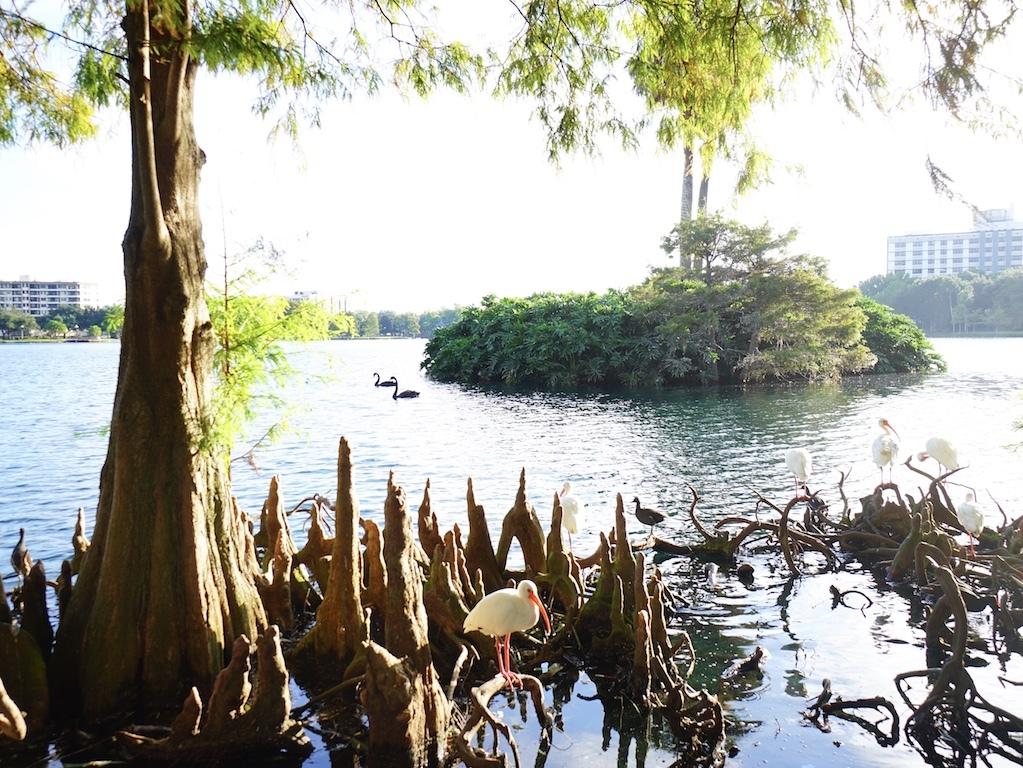 Lake Eola Park - Downtown Orlando   Orlando Land Trust