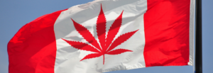 legalized marijuana canada