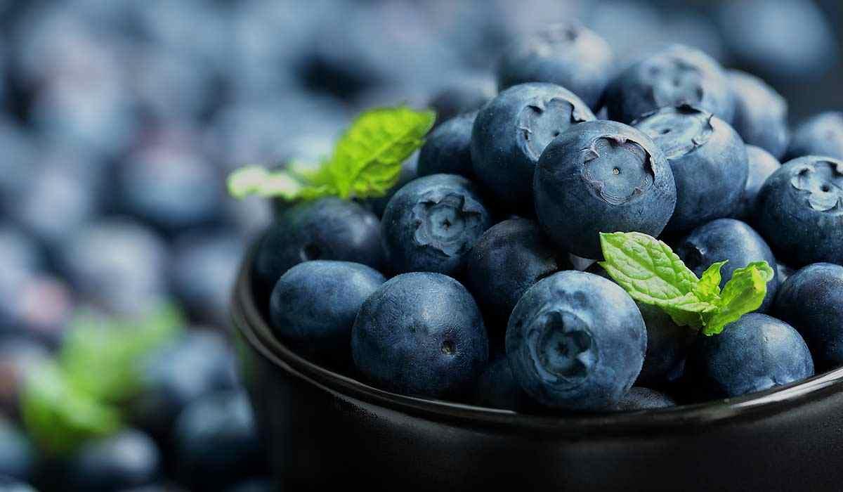 Agrovision Blueberries