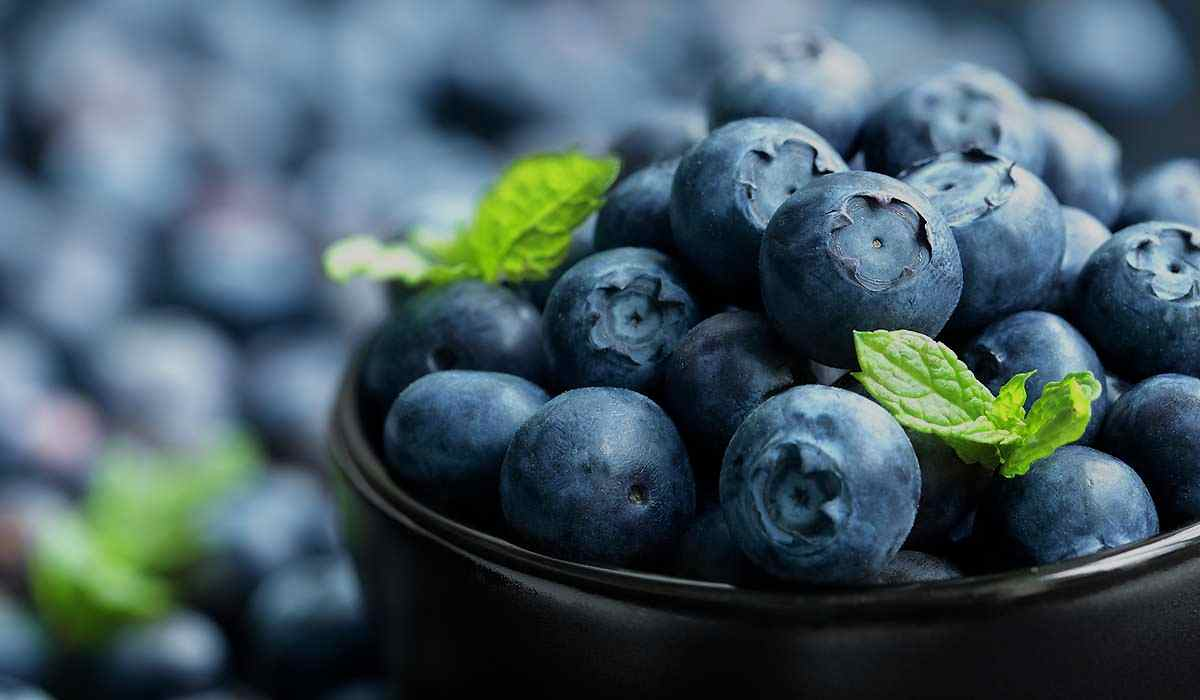 Agrovision Blueberries