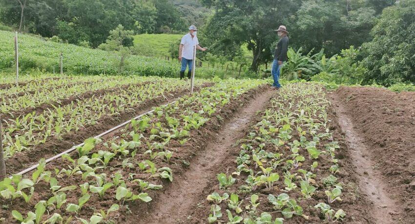 Presidente Cortizo entrega B/520 mil a productores agropecuarios