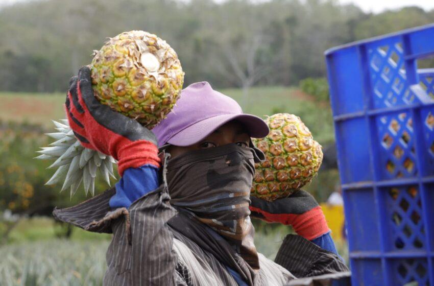 Impulsarán la competividad agroindustrial en Panamá