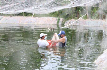 Privadas de libertad cosechan más de 100 libras de tilapias