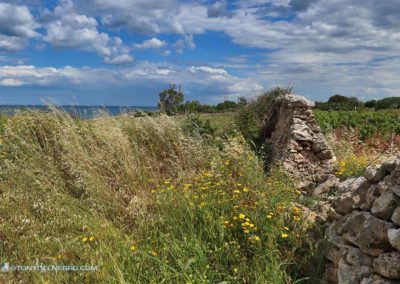 Tony-DelNegro-Cape-Cod-Photos-Italy128