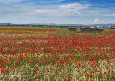 Tony-DelNegro-Cape-Cod-Photos-Italy132