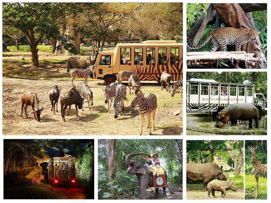 Bali Safari And Marine Park Tour