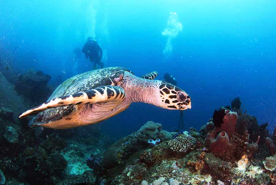 Double Dive at Blue Lagoon combination sightseeing tour eastern Bali - Bali Safest Driver