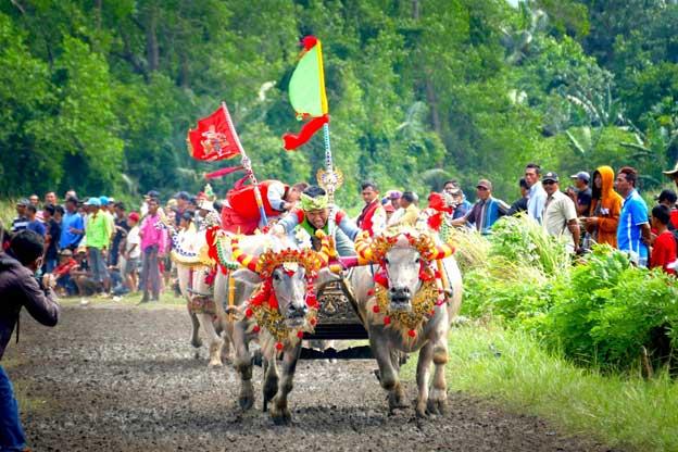 Bali A1 Driver Blog News Bali Driver