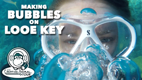 Making Bubbles On Looe Key