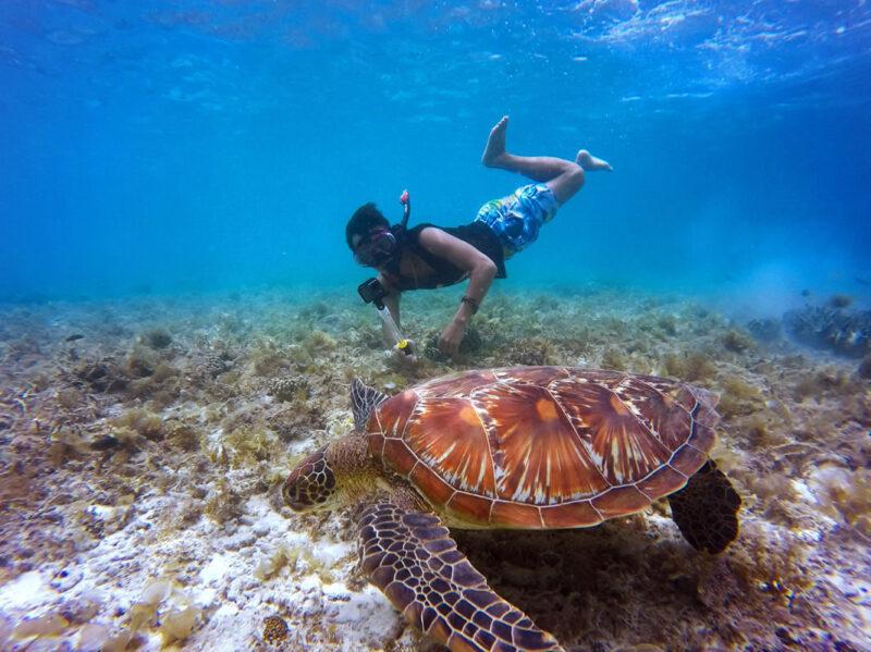 Turtle encounters
