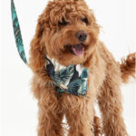 pañoleta-pajaros-perro