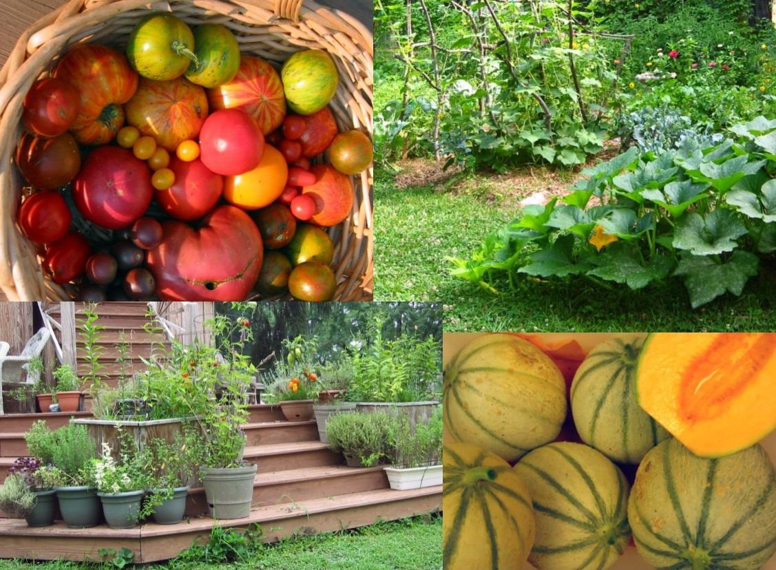 learn how to grow organic food