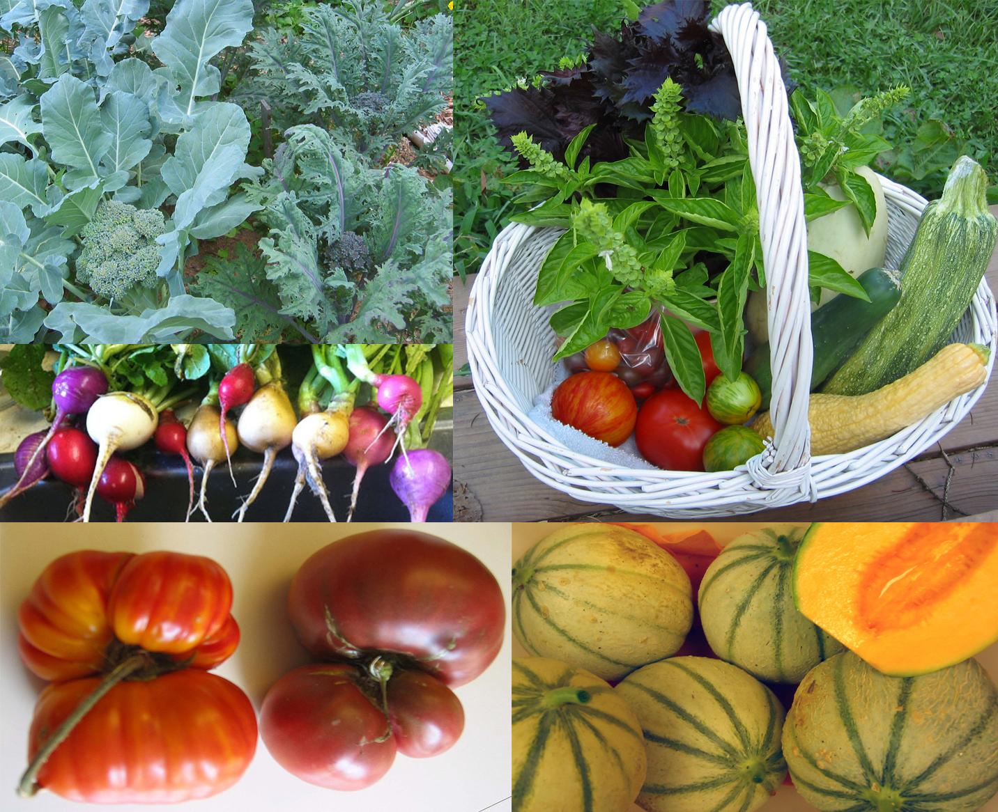 grow great veggies