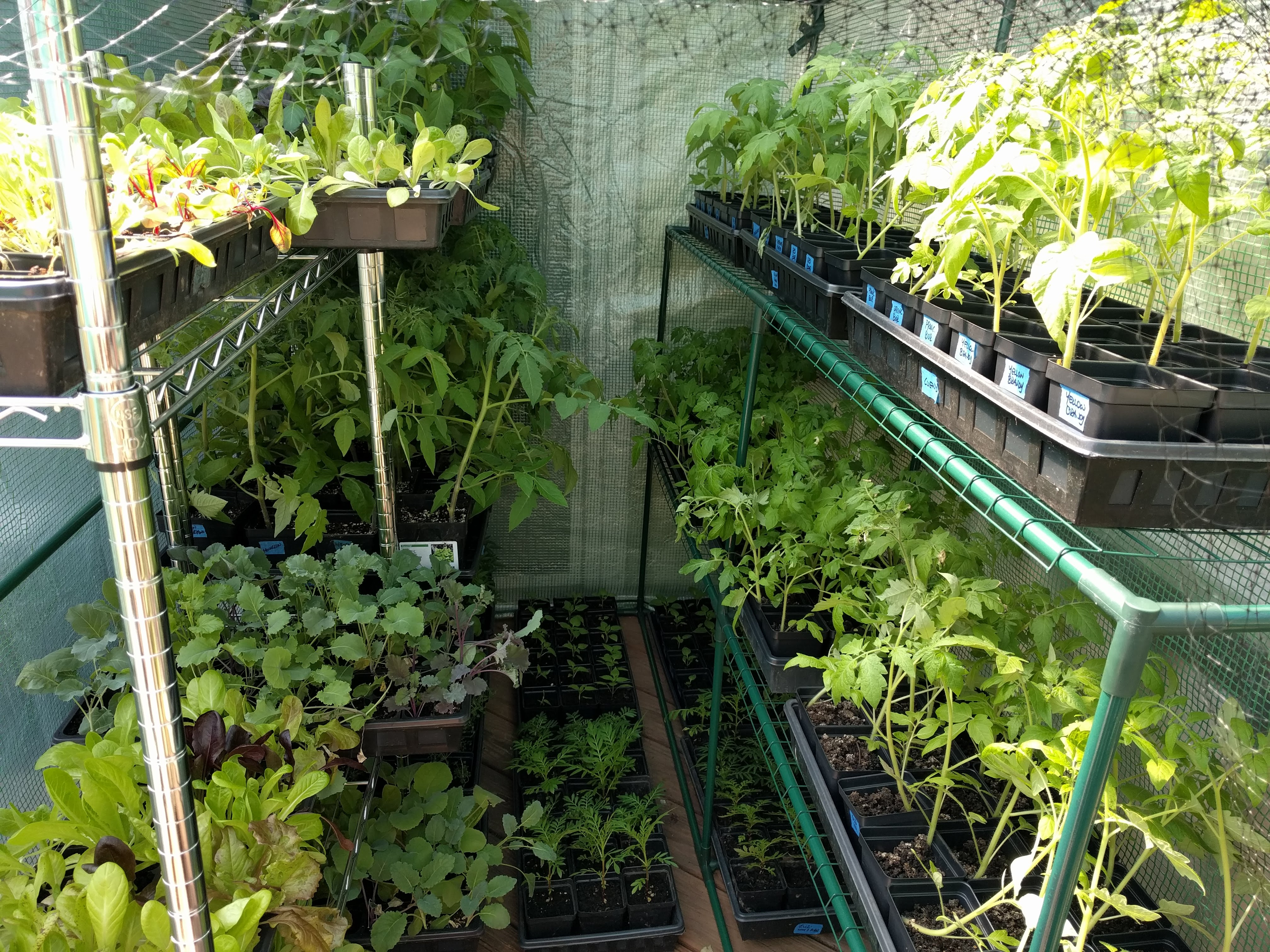 local sustainable grow plants