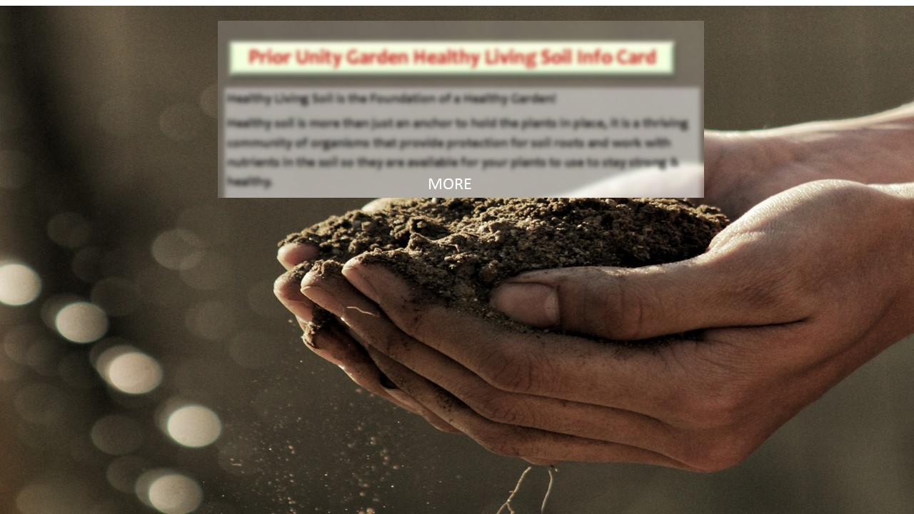 see what living soil is made of