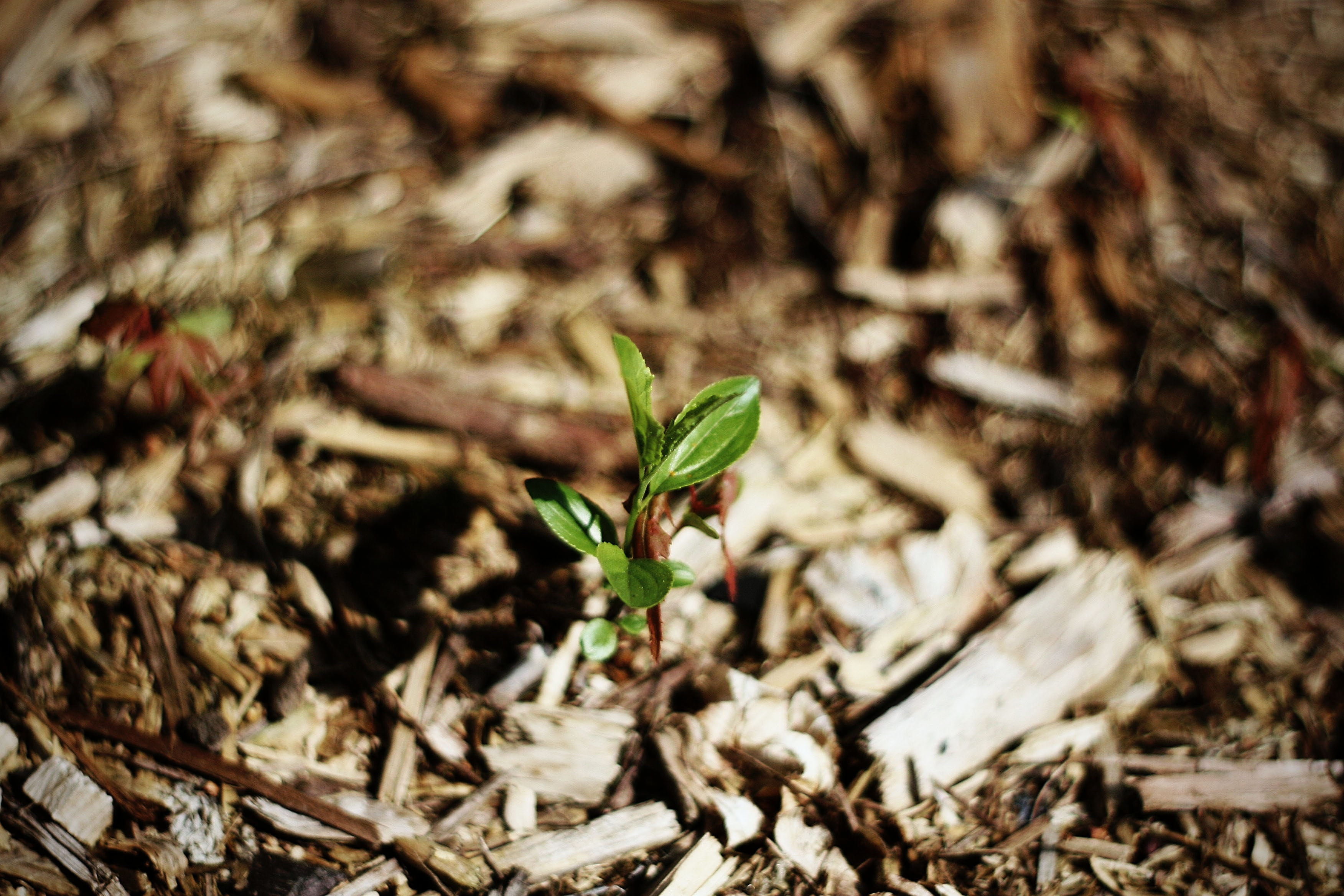 learn how to mulch your garden and yard