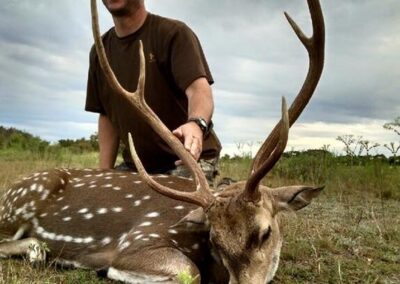 Axis Buck Harvest